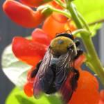 """""""Bee"""" by pmesenseney"""
