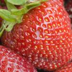 """""""Close up of the strawberry"""" by igorsin"""