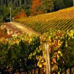 """""""Tuscan Vineyards"""" by raetucker"""