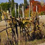 """""""Tuscan Autumn"""" by raetucker"""