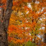 """""""Colors of Autumn"""" by ZeipekisPhotography"""
