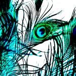 """""""Peacock Pride No. 2"""" by pattifriday"""