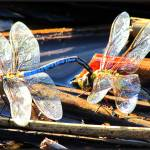 """Dragonfly Couple"" by angelstudio54"