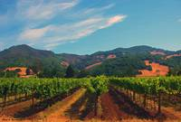 Californa  Vineyard