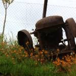 """an old tractor close to McGregor, Western Cape"" by goosie-claassen"