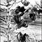 """""""Yucca"""" by anncarol"""
