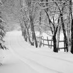 """""""Neverending Winter"""" by woolleybear"""