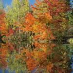 """Autumn Reflection"" by woolleybear"