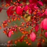 """""""Burst of Red"""" by woolleybear"""