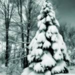 """""""Lots of Snow"""" by woolleybear"""