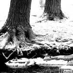 """""""Winter Black & White"""" by woolleybear"""