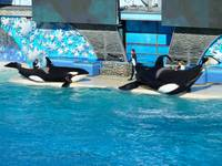 Killer Whales on Stage