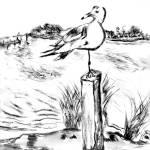 """Seagull"