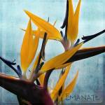 """Botaniquadrati: Emanate"" by janith_johnson"
