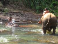 Boys Bathing Elephants