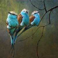 """racquet tailed rollers blue birds of africa"" by rchristophervest"