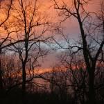 """Hawk at Sunrise"" by KsWorldArt"