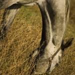 """Horse"" by ilariatuberosa"