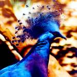"""Victoria Crowned Pigeon"" by MBush1us"
