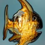 """Bushfire Fish"" by davril"