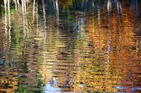 Autumnal Reflections I