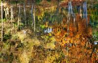 Autumnal Reflections II