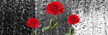 Rainy Day Dahlias
