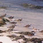 """Birds on Beach"" by JaneKPhoto"