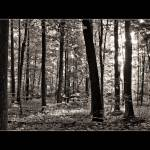 """Sacred Grove - Summer, toned b&w"" by dbwalton"