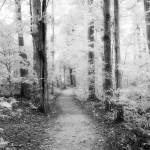 """Sacred Grove (Infrared B&W)"" by dbwalton"