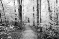 Sacred Grove (Infrared B&W)