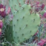 """Prickly Heart"" by samos"