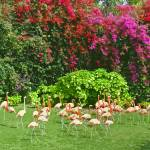 """Flock of Pink Flamingos"" by JaneKPhoto"