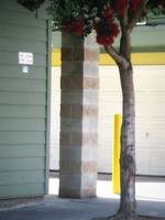 Bottlebrush Tree with Yellow Pole