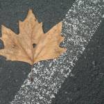 """Parking Lot Leaf at Flax Art & Design"" by MyThirdEye"