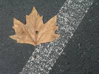 Parking Lot Leaf at Flax Art & Design