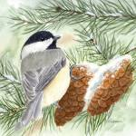 """Chickadee in the Pines"" by catspaw"