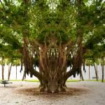 """""""Tree magic park"""" by mdarrah"""