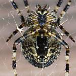 """""""Come into my web"""" by DaveScott"""