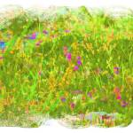 """Wild Flowers"" by DaveScott"