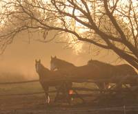 Sunrise and Horses Series #5