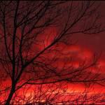 """Firestorm"" by CherylCharette"