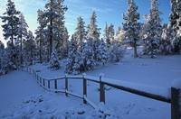 Winter Sunrise In Meadow Glen, Big Bear Lake, CA