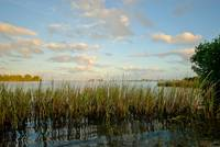 Beyond the Marsh Grass
