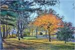 Fall Foliage by micspics444