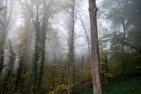 Autumn Foggy Woods