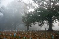 Foggy Fall Cemetary