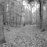 """Walk Through the Woods"" by LJArt"