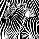 """Binary Zebras"" by binary-options"