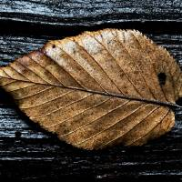 Fall Contrast by Jim Crotty